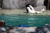 Young Polar Bear Playing