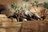 Meerkats and Porcupines