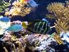 Reef Fish 3