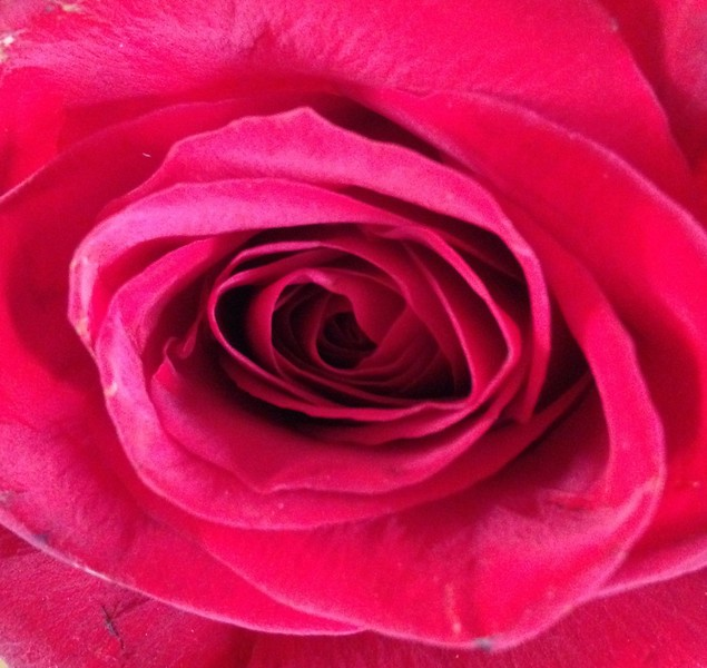 $2 roses