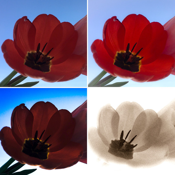 Photoshop Express on an iPhone 5s
