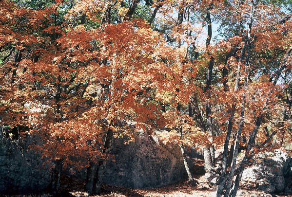 1980-Lost Maples