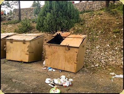 Bear in Dumpster