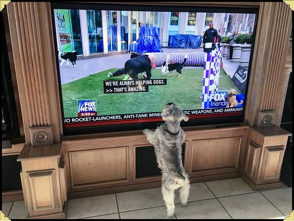 Wolfie Watching TV