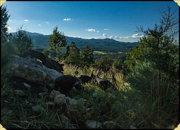 Trail Trap
