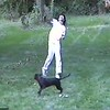 Playing in the Yard