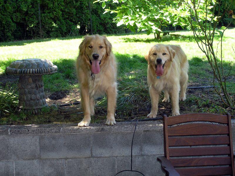 Where's the ball? (Rusty & Shogo)
