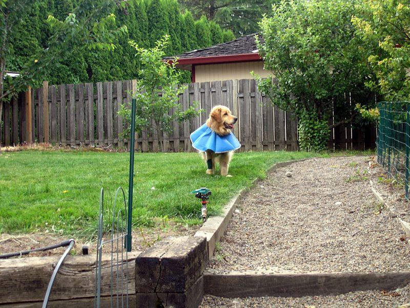 Almost a doggie tutu.