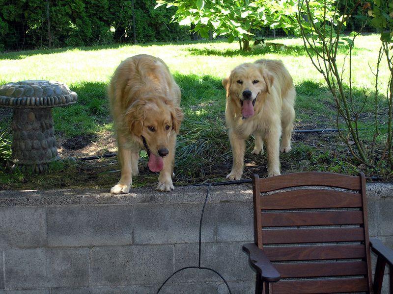 Rusty & Shogo
