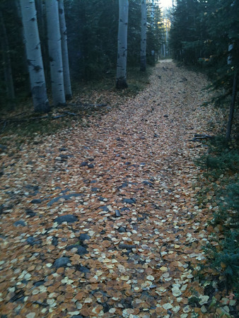 follow the yellow leaf road