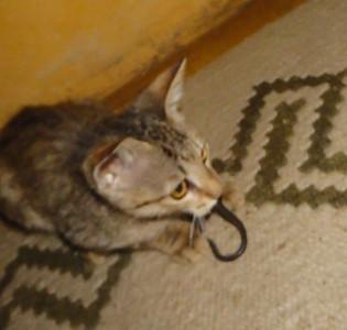 PINDA--- our extraordinary BUSH cat.