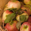 Apples at the Fall Fair