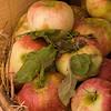 Apples at the Fall Fair