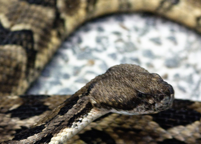 snake2-1