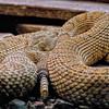 snake8-7