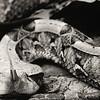 snake6-6