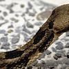 snake1-2