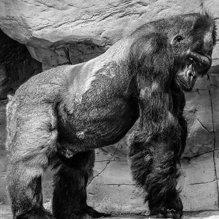 Memphis Zoo June 2018