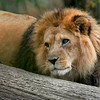 lionkingfinal-1