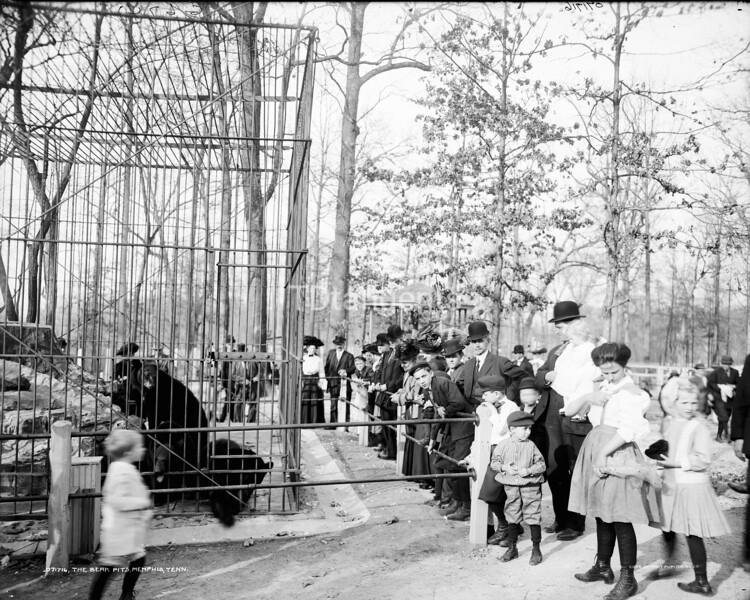 Bear pits, Memphis, Tenn., The  Enlarge, between 1900 and 1920