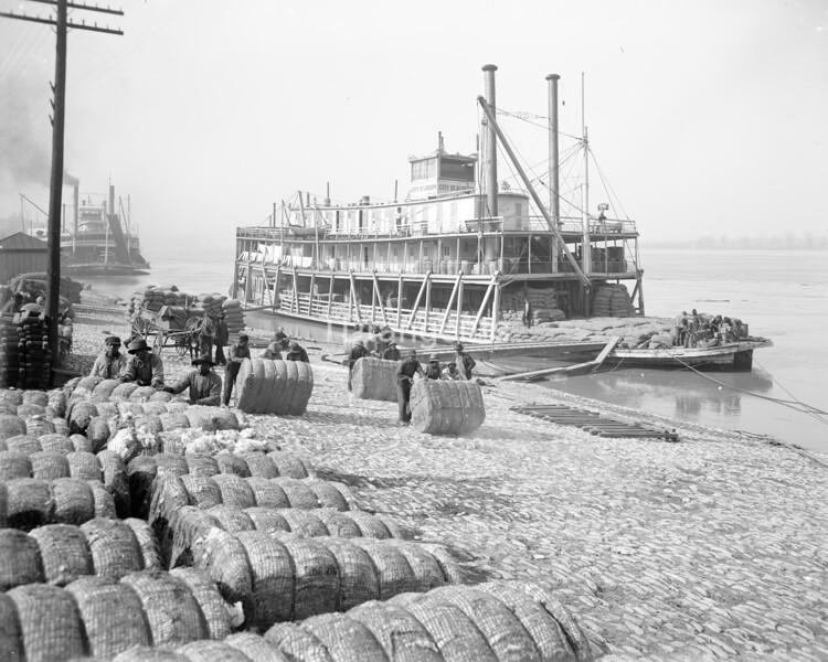 Unloading cotton, Memphis, Tenn., between 1900 and 1915
