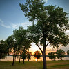 Mud Island Trees at Sunset