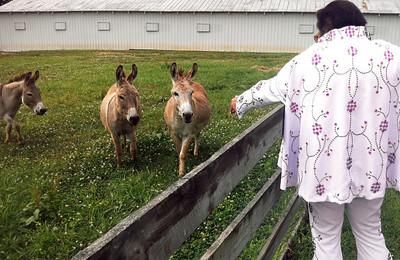 Elvis meets the mules