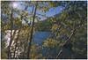Twin Lakes Sunburst Aspens