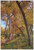 Autumn Path at Lindo Lake