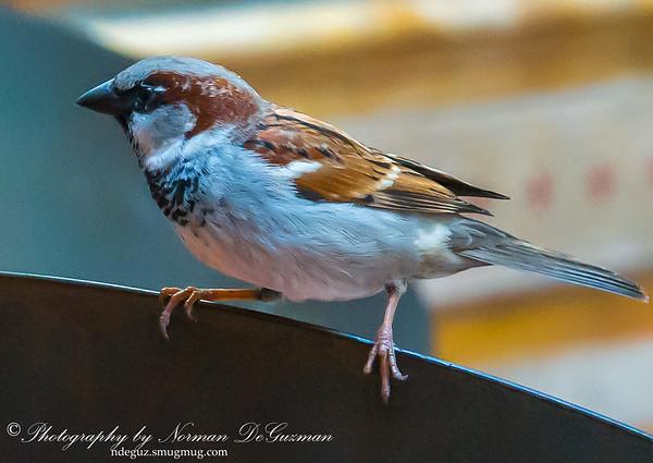 Opportunistic Bird