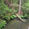 Little River, Mendocino