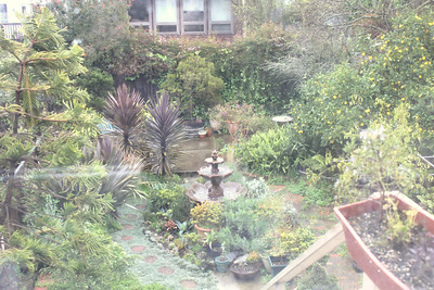 Backyard garden, part of the San Francisco home of Jim Van Buskirk.  Jim was also this segment's interviewer. ________________________________________________________________________________________ Filming at the home of Jim Van Buskirk, San Francisco, on March 19th, 2011.  Jim also served as the interviewer for this segment.  NOTE►These photos look best if you maximize your browser window to full screen.
