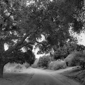 Back Roads #3