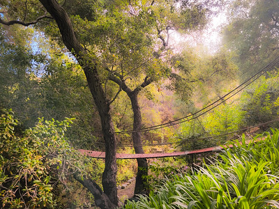 A Bridge Under The Oak