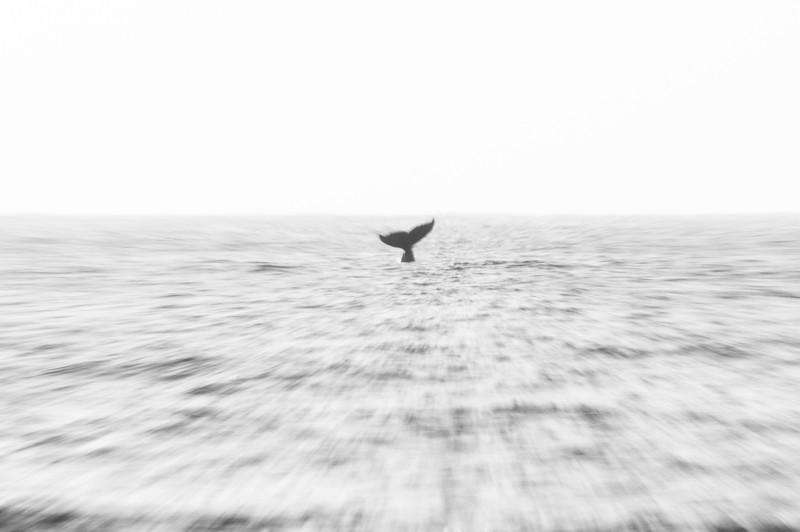 2008-42. Whales in Barra, Inhambane.