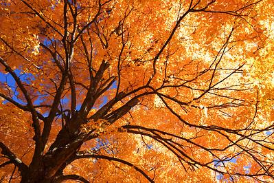 Fall Foliage Ipswich Massachusetts