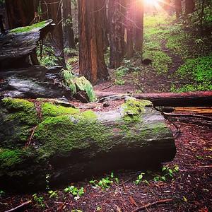Roys Redwoods