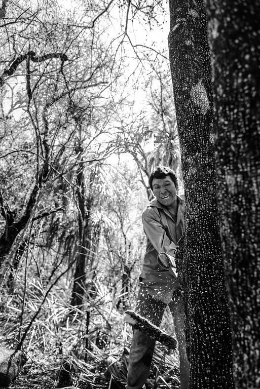 Honig im Wald