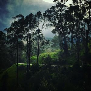 Eucalyptus Hill