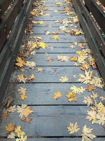 Leaf Bridge