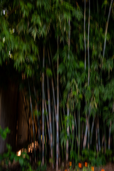 ICM bamboo
