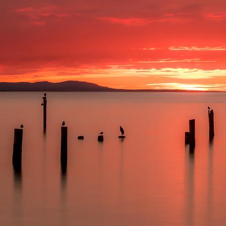 Coaster - Picnic Point Beach Sunset