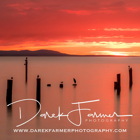 Coaster - Picnic Point Sunset