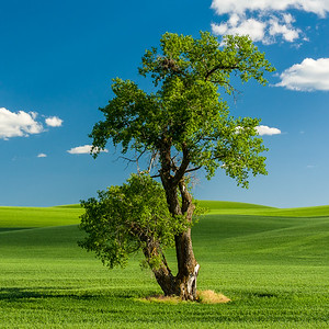 Coaster - Lone Tree 2