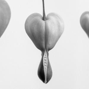 Coaster - Bleeding Hearts - Black & White