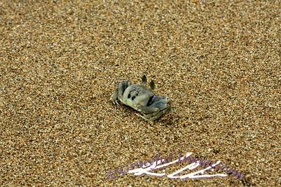Little Crabby