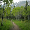 Forest trail, Glacier National Park, Montana