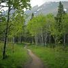 Forest trail, Glacier National Park, Montana
