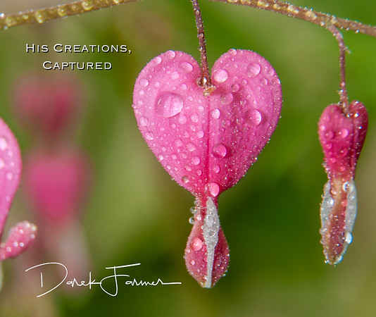 Mouse Pad-Macro Bleeding Heart with water droplets-HCC