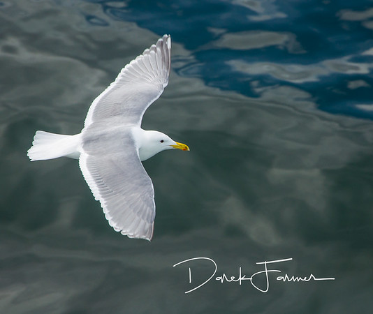 Mouse Pad-Seagull in Flight